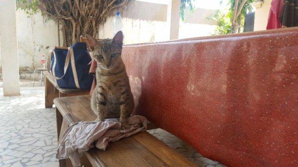 Touba, un des chats de la maison