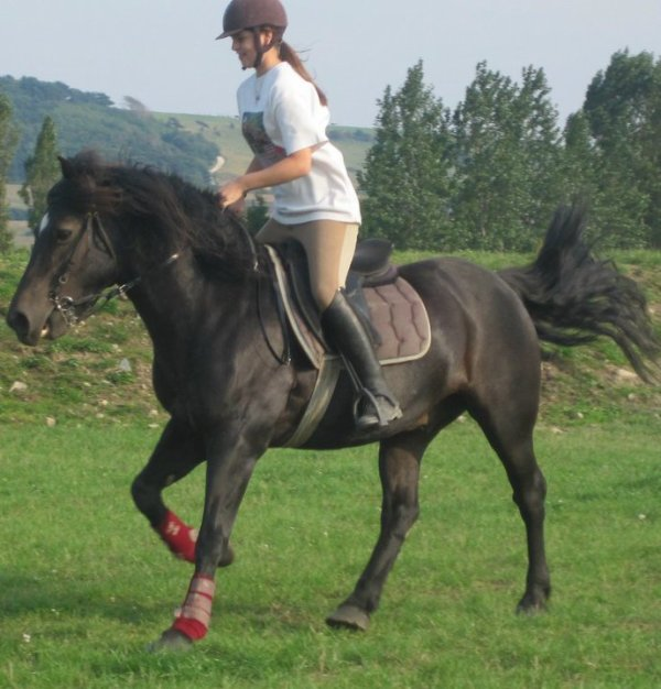 Plus qu'un simple poney (l)