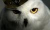 WhiteOwls