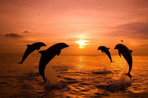 La magie de l'océan. ♥