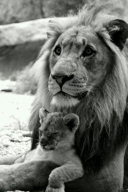 Les bras des mères sont faits de tendresse ; les enfants y dorment profondément.