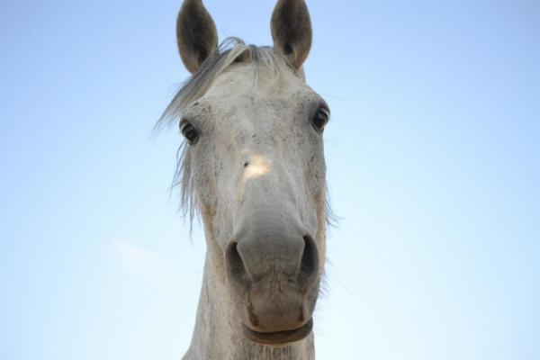 Luxor,ou le cheval de ma vie.