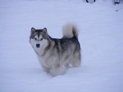 Mercredi sous la neige