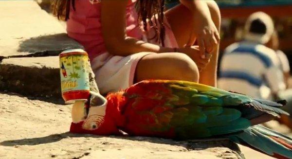 Un perroquet qui boit un tropico :D