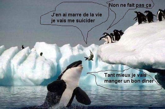 Suicide d'un manchot