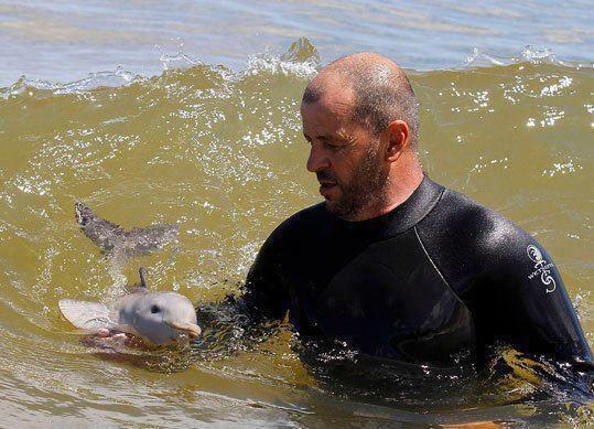 Un bébé dauphin ^^