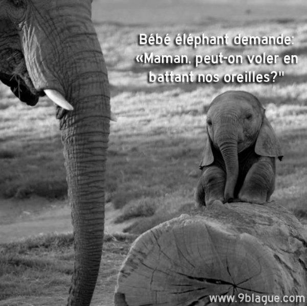 Un éléphanteau demande à sa mère...