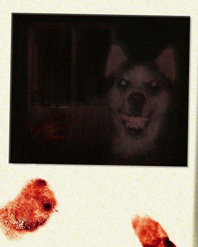 Smiledog.jpg , comment une image peut tuer !