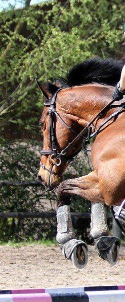 . La beauté du cheval est seulement extérieure. Vous vous trompez, vraiment . .