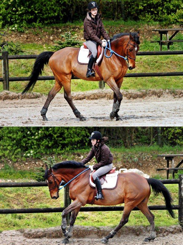 """""""Le cheval, comme chacun le sait, est la partie la plus importante du cavalier."""" Jean Giraudoux."""
