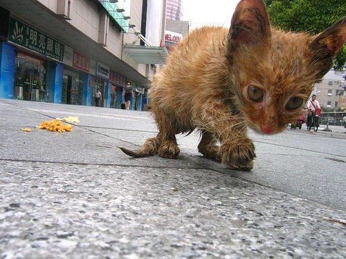 Un chat abandonner est un chat mort..