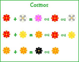 Les fleurs !