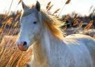I ♥ horse