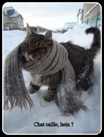 """Résultat de recherche d'images pour """"chat caille  Humour"""""""