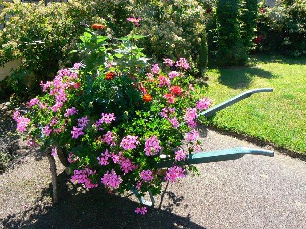 Mon jardin au fil du temps ...