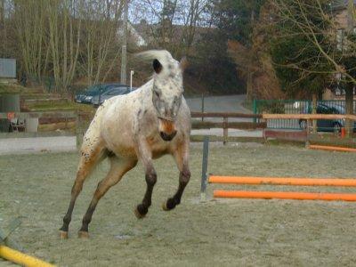Le cheval volant existe ! Sii siii !! La preuve en est la ! MDRRR xD qu'est ce que je l'aimeeee ma petite folle <3