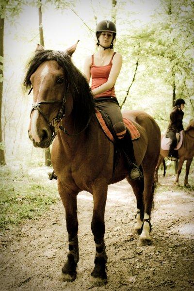 La preuve que tous les chevaux peuvent avoir une grande classe.