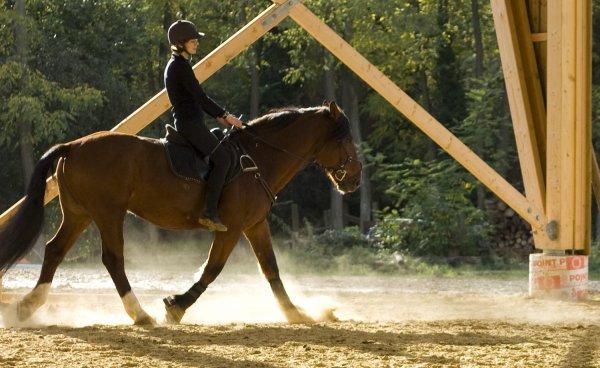 Il m'as appris a vraiment travailler avec mon cheval...