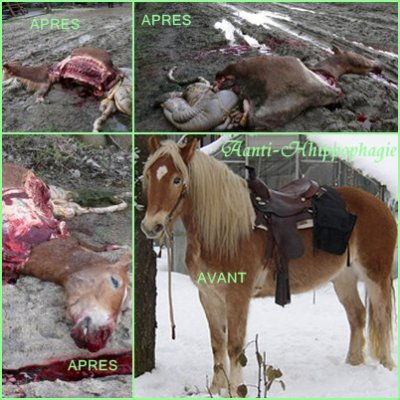 Des chevaux trouver MORT !!!!!
