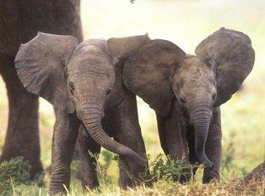 Maltraitance des Elephants :(