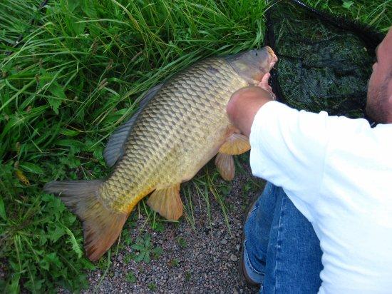 20 minutes de pêche et voilà le résultat....... environ 10 kg