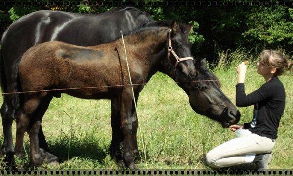 Chaque wek-end, je redécouvre mon bébé poney & m'émerveille devant cette jument sublime.