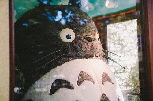 """""""Fouchtra!! J'ai somnolé par inadvertance!!"""" Monkey D. Garp - One Piece, chapitre 432 (La boîte à surprises)"""
