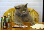 Un chat assie