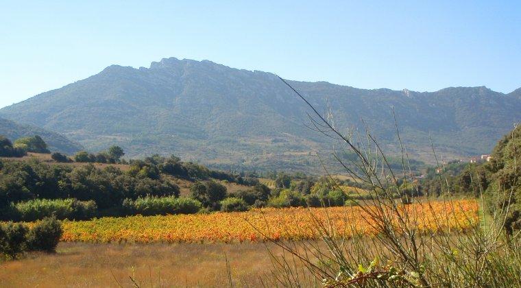 Automne en Corbières , que la vigne est belle !