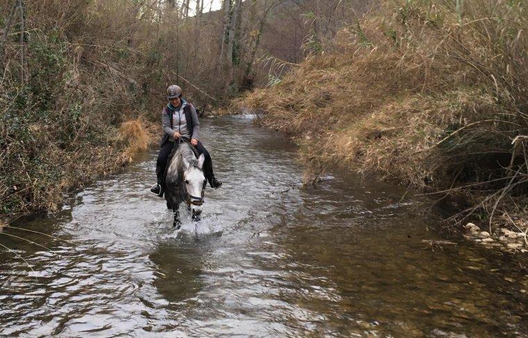 """Camino...... le cheval """" tout chemins """" !"""