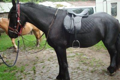 SAMEDI 21 aout 2010 Super balade avec mon cheval préférée .... Le frison :) et dimanche 22 aout 2010 cours d'équitation d'Alia notre chérie avec Choco .