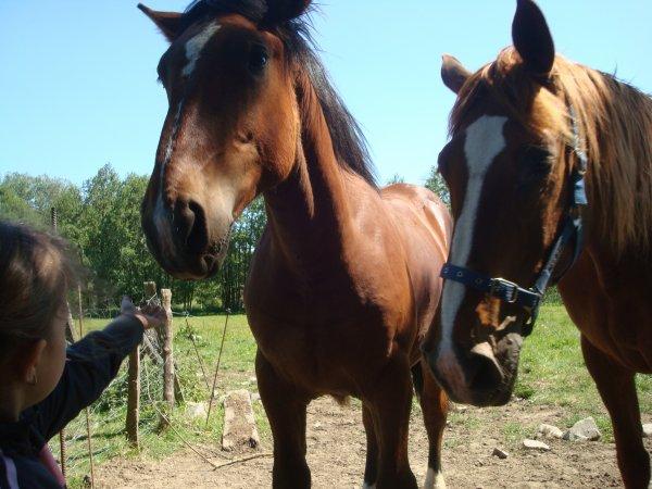 depuis Avril 2011 et CE wEekend   25 et 26 juin 2011  au camping .... près de lui & elle (l)