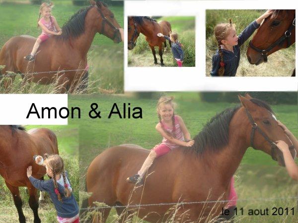 """Alia & Amon 11 aout 2011 § """"Ne jamais traiter un cheval avec colère"""" (Xénophon)   § """"Votre cheval vous ressemble comme votre reflet dans un miroir"""" (John Lyons)"""