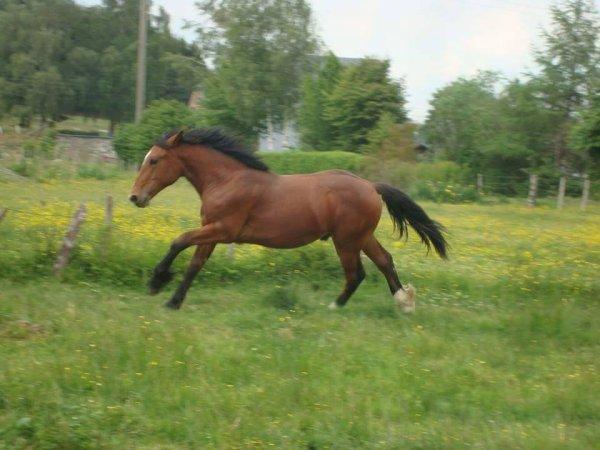 le cheval le plus cher de Belgique