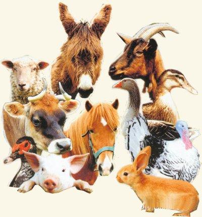 Blague d'animaux