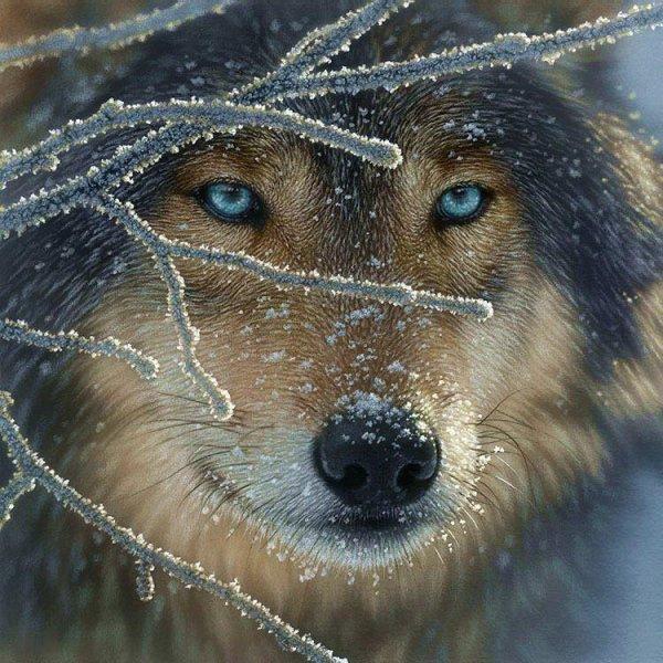 Amérindiens et loups (l) (l) (l)