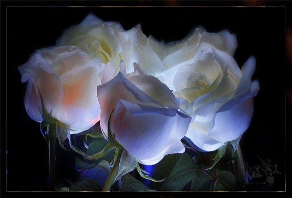 Amérindiens, roses L O V E (l) (l) (l)