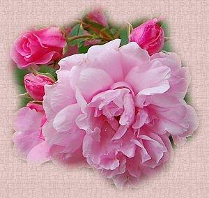 Cadeau pour mon amie Catherine1840 (l) (l) (l)