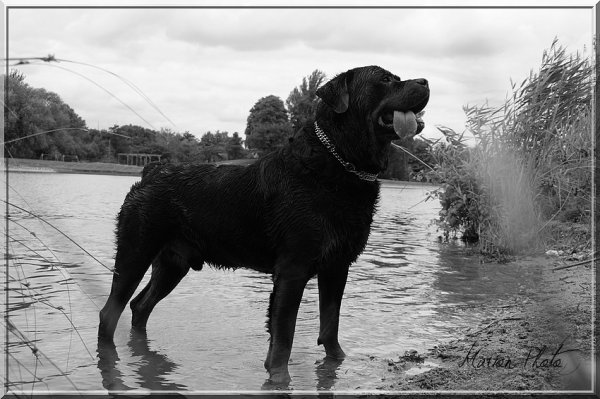 Ares 6ans