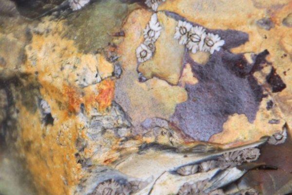 Lorsque des formes apparaissent dans les pierres d'un bord de mer...