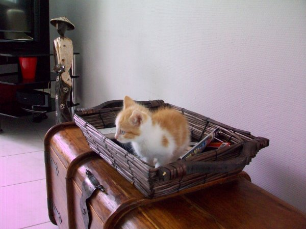 Mystic...... notre nouveau petit résident...