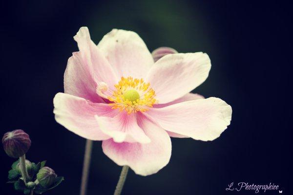 Celui qui cueille une fleur dérange une étoile.