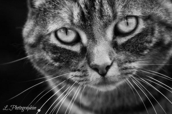 Dieu a créé le chat pour que l'homme puisse caresser le tigre.