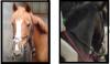 Guilers-Equitation