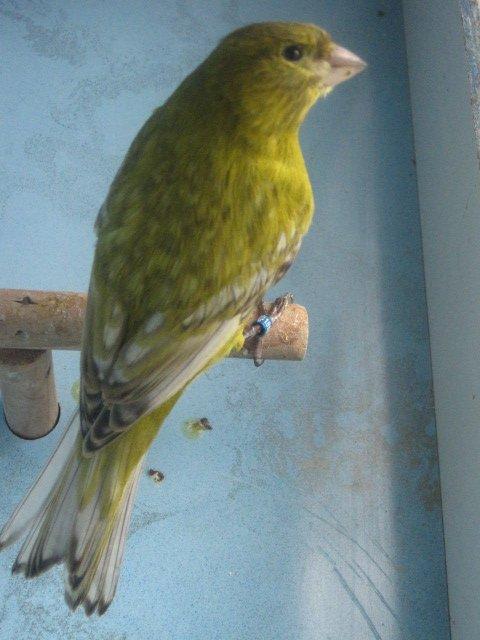--------------Meilleur  oiseau..----------------