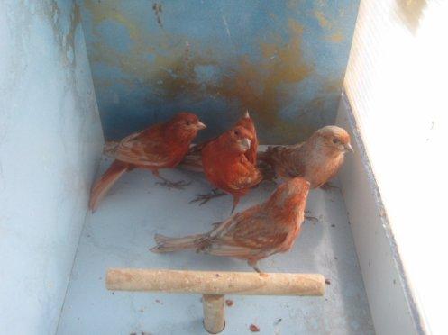 ---------millésime   2011    première sélection --  fond rouge  ------------------------------