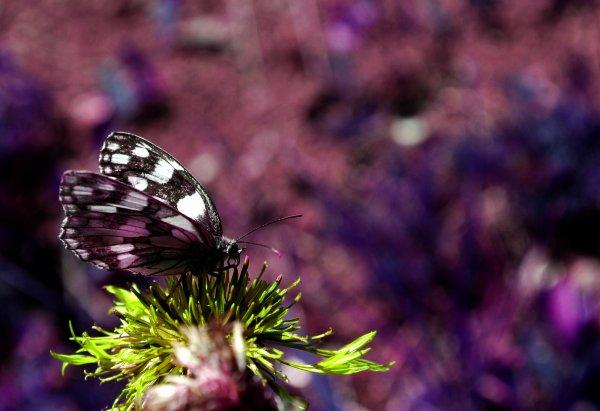 Même quand on l'a perdu, l'amour qu'on a connu vous laisse un goût de miel. L'amour, c'est éternel !Edith Piaf