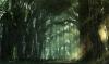 L'histoire étrange d'une fille étrange chapitre 10 : la forêt