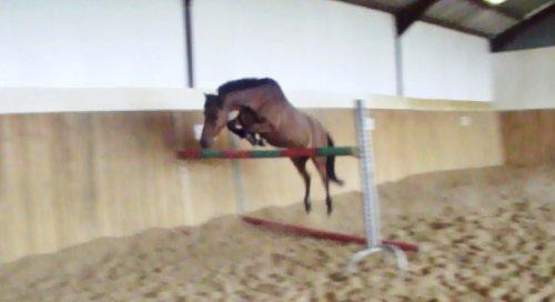 Le cheval a la perception comme il a la sensation, la comparaison et le souvenir. Il a donc le jugement et la mémoire. Il a donc l'intelligence.