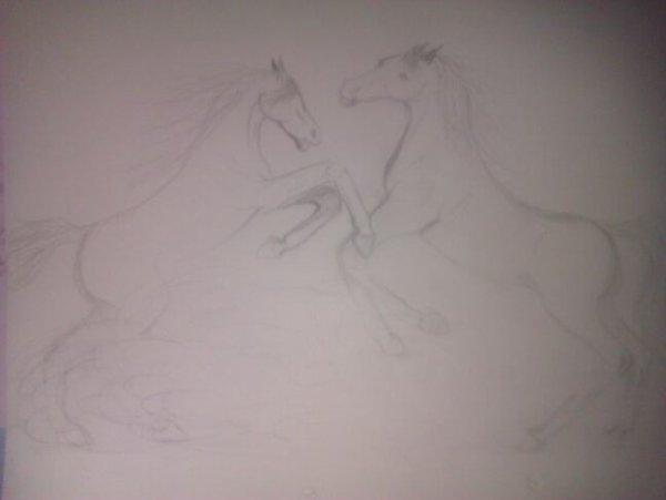 Un combat entre deux chevaux